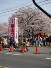 Sakuramatsuri20090405