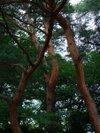 Akamatsu20090609