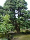 Itosugi20091005