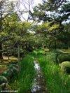 Kakitsubata20091005_2