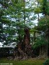 Katsura20091005