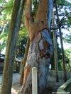 Keyaki200910041