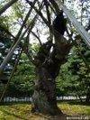 Mayakou20091005