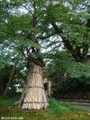 Momiji200910052