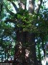 Shirayamahimejinjya200910044