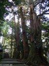 Shirayamahimejinjya200910046