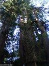 Shirayamahimejinjya200910047