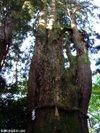 Shirayamahimejinjya200910048