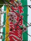 Sakura200910252