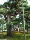 Neagarimatsu200910056