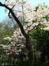 Ichiyou_to_youkihi_20100502
