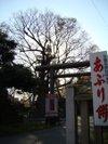 Ookeyaki201005012