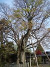 Ookeyaki201005021