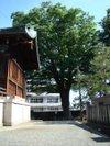 Keyaki20100606