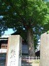 Keyaki201006061