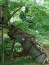 Kenrokuen201009121