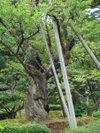 Kenrokuen2010091213