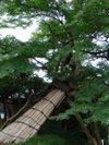 Kenrokuen201009122