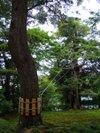 Kenrokuen201009123
