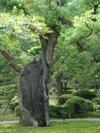 Kenrokuen201009128