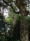 Kagonoki201110017
