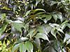 Tsuburajii201111033
