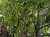 Tsuburajii201111034