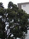 Shiinomi201111234