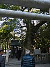 Kusunoki201202201