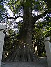 Kusunoki201202203