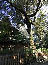 Tsuburajii20120220