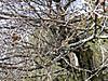Mamenashi201203111