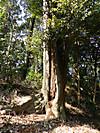 Tsuburajii201203112