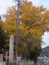 Kouyou12i